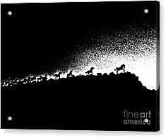 Wild Stallions Silhouette Acrylic Print by Chuck Flewelling