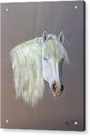 Wild Acrylic Print by Stephen Thomson