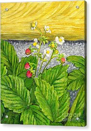 Acrylic Print featuring the painting Wild Strawberries In Summer by Jingfen Hwu