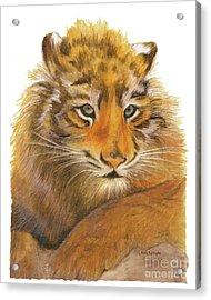Acrylic Print featuring the painting Wild Tiger Cub by Nan Wright