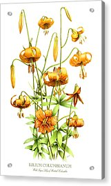 Wild Tiger Lilies Acrylic Print by Artellus Artworks