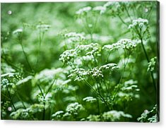 Wild Vegetation Acrylic Print by Alexander Senin