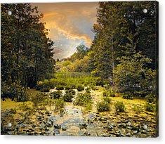 Wild Wetlands Acrylic Print by Jessica Jenney