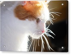 Wild Whiskers Acrylic Print