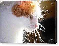 Wild Whiskers Acrylic Print