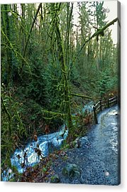 Wild Wood Trail Acrylic Print by Charles Lucas