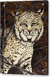 Wildcat Acrylic Print by Rick Bainbridge