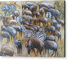 Wildebeest Migration In Kenya Acrylic Print