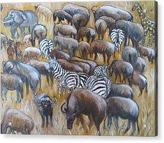 Wildebeest Migration In Kenya Acrylic Print