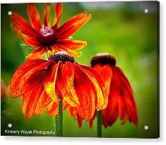 Wildest Bloom Acrylic Print