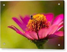 Wildflower - Bali Acrylic Print