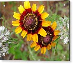 Wildflower 5 Acrylic Print by Michael Rushing