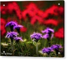 Wildflower Fantasy Acrylic Print