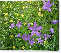Acrylic Print featuring the photograph Wildflower Garden by Martin Howard