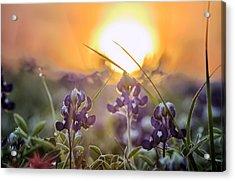 Wildflower Glow Acrylic Print
