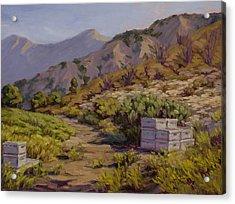 Wildflower Honey Fields Acrylic Print