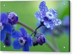 Wildflower In The Rain Acrylic Print by Kathy Yates