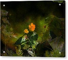Wildflower In The Twilight Zone Acrylic Print by J Larry Walker