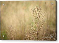 Wildflower Acrylic Print by Jolanta Meskauskiene