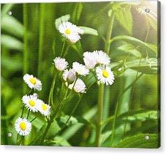 Wildflower Acrylic Print by Kellie Prowse