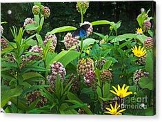Wildflower Meadow Acrylic Print by Kenneth Murray