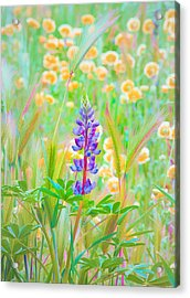 Wildflower Meadow - Spring In Central California Acrylic Print by Ram Vasudev