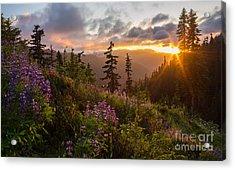 Wildflower Meadows Sunstar Acrylic Print by Mike Reid
