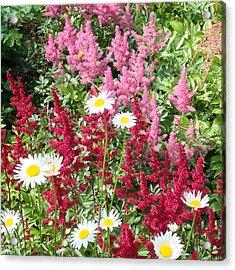 Wildflower Medley Acrylic Print
