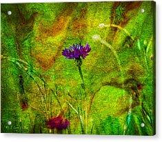 Wildflower Pettifoggery Acrylic Print by J Larry Walker