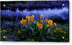 Wildflower Reflection Acrylic Print by Dan Sproul