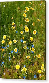 Wildflower Salad - Spring In Central California Acrylic Print by Ram Vasudev
