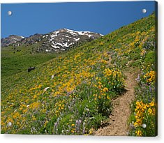 Acrylic Print featuring the photograph Wildflower Show by Jenessa Rahn