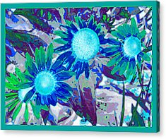 Wildflower Acrylic Print by Tom Druin