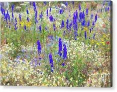 Wildflower Watercolour Acrylic Print by Tim Gainey