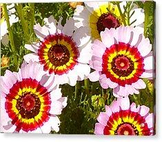 Wildflowerd Wide 1 Acrylic Print by Amy Vangsgard