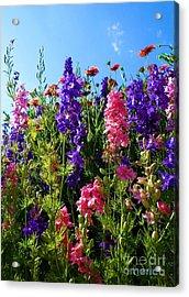 Wildflowers #14 Acrylic Print by Robert ONeil