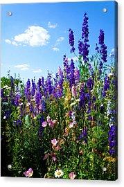 Wildflowers #9 Acrylic Print by Robert ONeil
