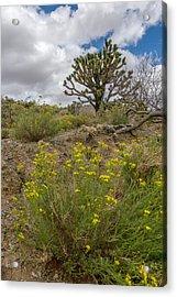 Wildflowers And Joshua Trees In Sunny Arizona Acrylic Print by Willie Harper