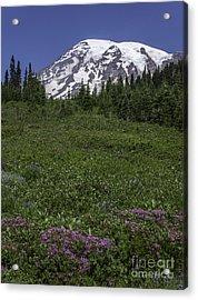 Wildflowers And Mt Rainier Summit Acrylic Print