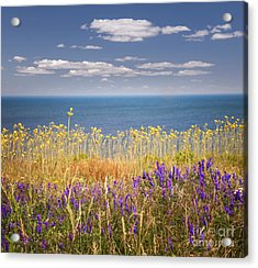 Wildflowers And Ocean Acrylic Print by Elena Elisseeva