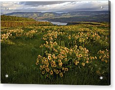 Wildflowers At Dawn On The Columbia Gorge Acrylic Print