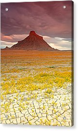 Wildflowers At Factory Butte. Acrylic Print
