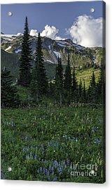 Wildflowers At Rainier Acrylic Print