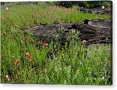 Wildflowers At Reveille Peak Ranch Acrylic Print by Cathy Alba