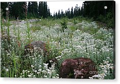 Wildflowers Callaghan Lake  Canada Acrylic Print by Amanda Holmes Tzafrir
