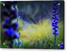 Wildflowers Acrylic Print by Celestial Images