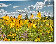 Wildflowers Dance Acrylic Print