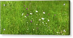 Wildflowers In A Field, Gooseberry Acrylic Print