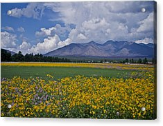 Acrylic Print featuring the photograph Wildflowers In Flag 9611 by Tom Kelly