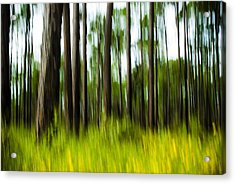 Wildflowers In The Forest Acrylic Print